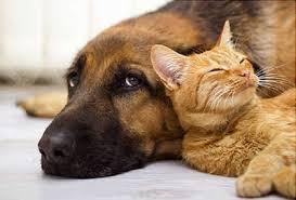 chien et chat sage